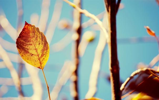 Фото обои осень, ветки, 1920x1200, стебель, размытость, дерево, растение