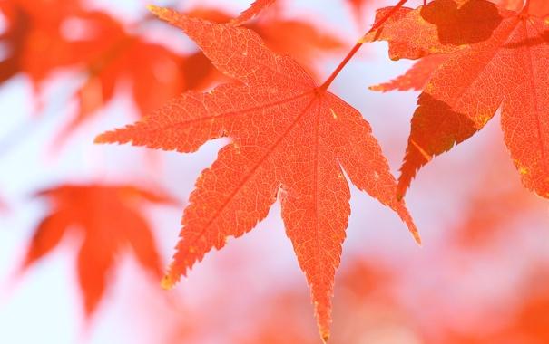 Фото обои осень, листья, макро, природа, осенние обои