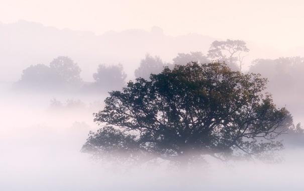 Фото обои лес, природа, туман, фото, дерево, утро, густой