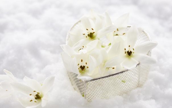 Фото обои снег, цветы, сердце