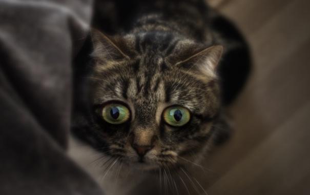 Фото обои глаза, котенок, испуг, мордочка