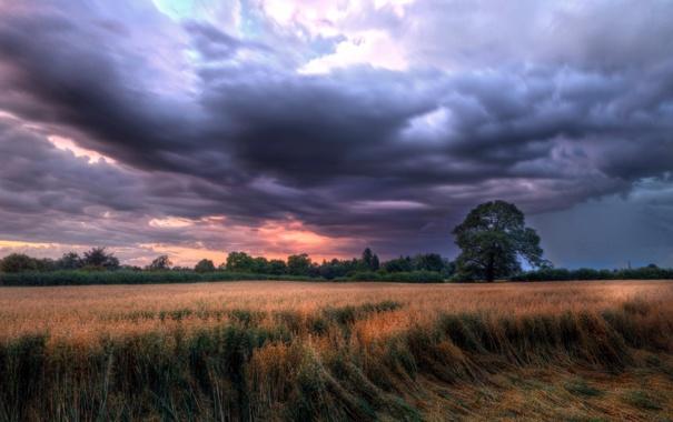 Фото обои поле, пейзаж, Cheshire, Congleton, Astbury