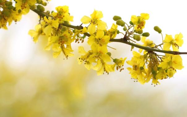Фото обои цветы, дерево, ветка, весна