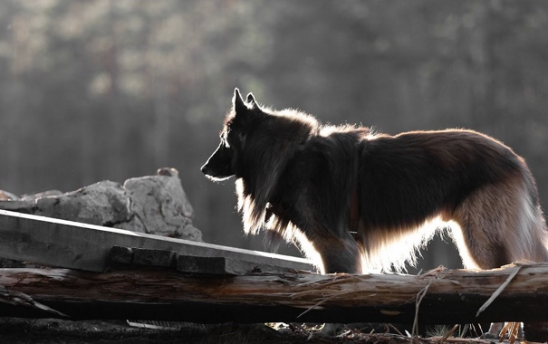Фото обои свет, друг, собака