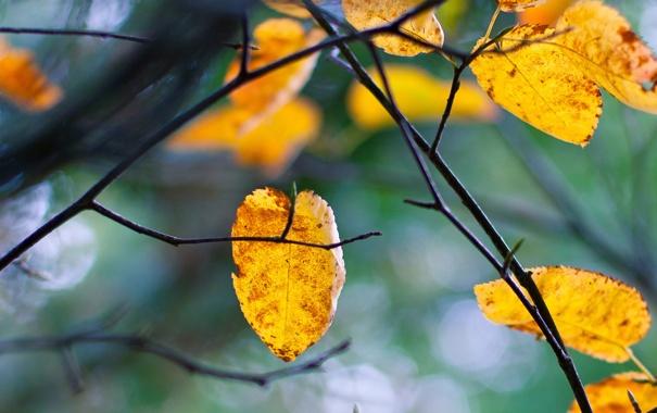 Фото обои осень, листья, ветки, дерево