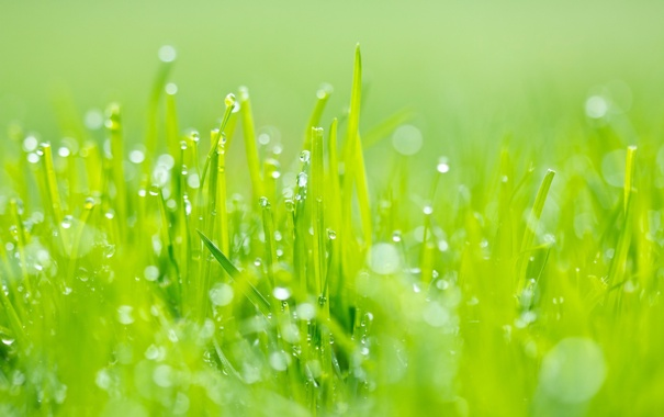 Фото обои зелень, трава, роса, блики, Макро