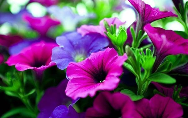 Фото обои листья, природа, ковер, цвет, лепестки, сад, клумба
