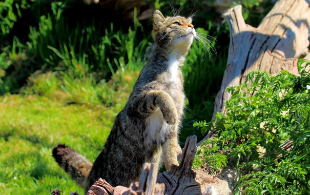 Фото обои кошка, лето, трава, кот, кошак, лапка