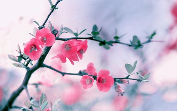 Фото обои ветка, весна, цветение