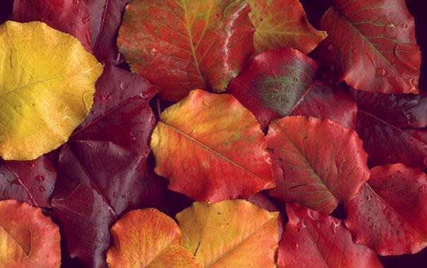 Фото обои осень, листья, капли, макро, фото, обои, осенние обои