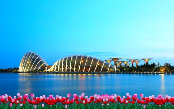 Фото обои цветы, город, здания, вечер, залив, Сингапур, тюльпаны
