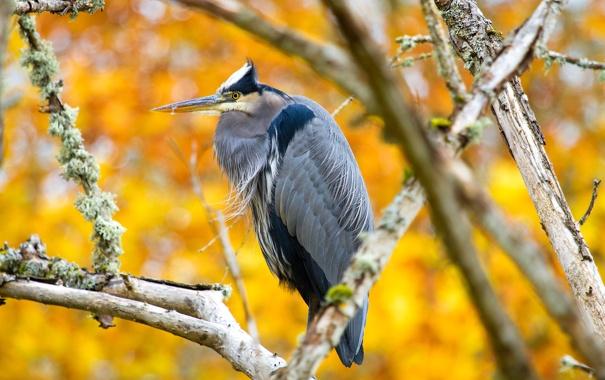 Фото обои птица, осень, ветки, клюв