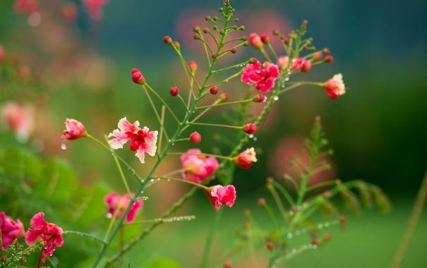 Фото обои цветы, куст, розовокррасные