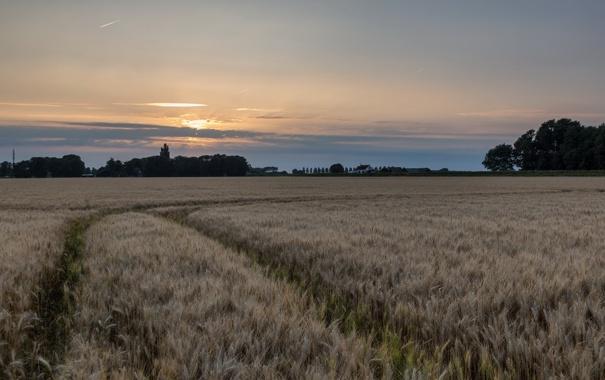 Фото обои поле, пейзаж, ночь, колосья
