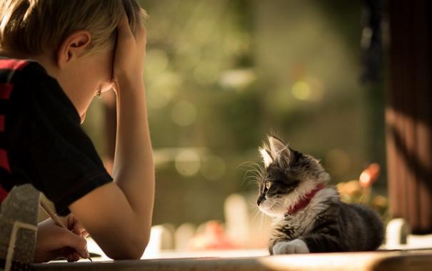Фото обои мальчик, настроение, кошка
