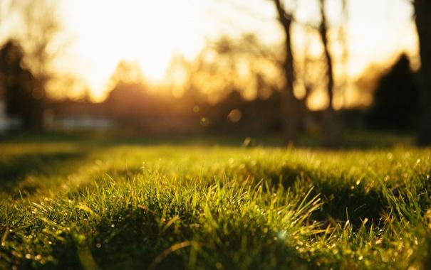 Фото обои трава, блики, размытость