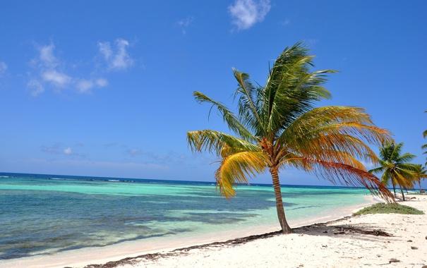 Фото обои пляж, океан, берег