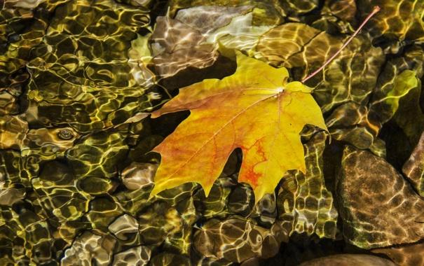 Фото обои отражение, вода, лист, рябь