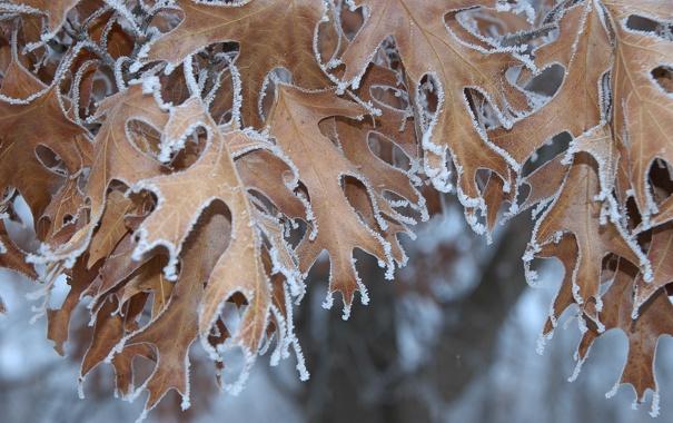 Фото обои иней, осень, листья, природа, кристаллы