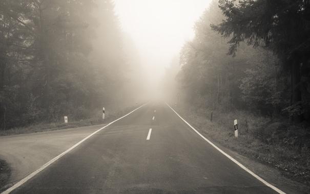 Фото обои дорога, лес, туман, разметка, поворот