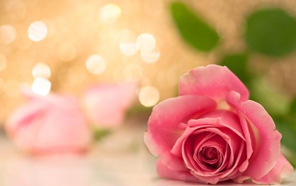 Фото обои букет, розы, цветы
