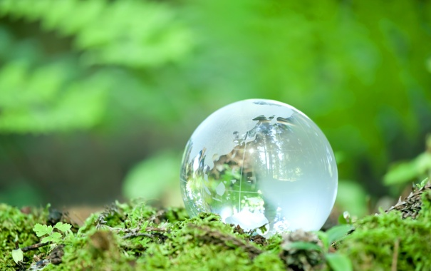 Фото обои зелень, отражение, мох, шарик, боке