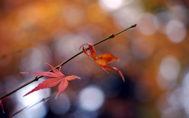 Фото обои листья, природа, фон