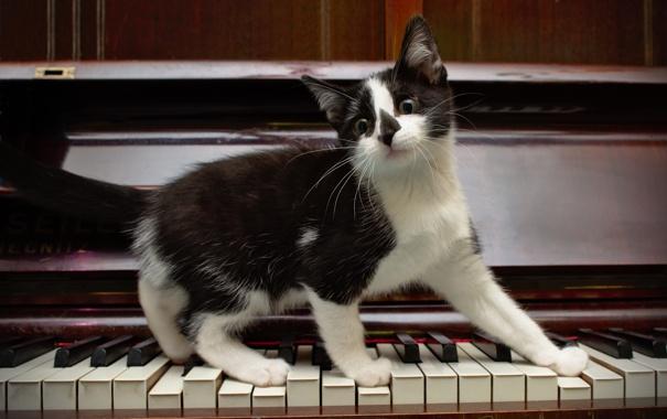 Фото обои котёнок, пианино, клавиши