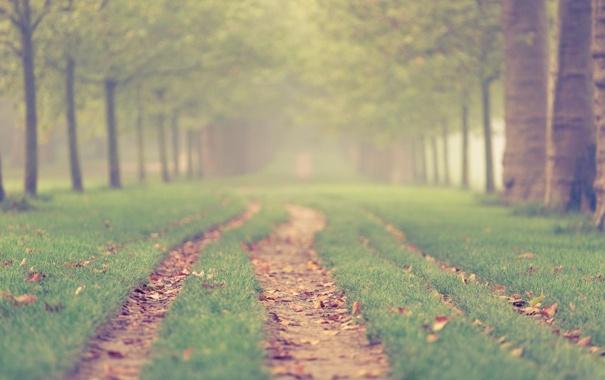Фото обои дорога, трава, деревья, сад, дорожка, аллея