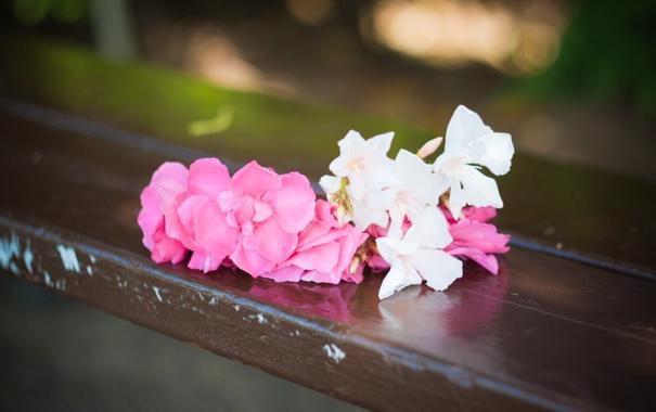 Фото обои любовь, цветы, скамейка, розовый, романтика