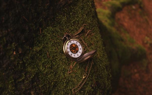 Фото обои дерево, часы, мох, цепочка
