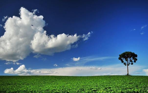 Фото обои поле, лето, небо, дерево, облако