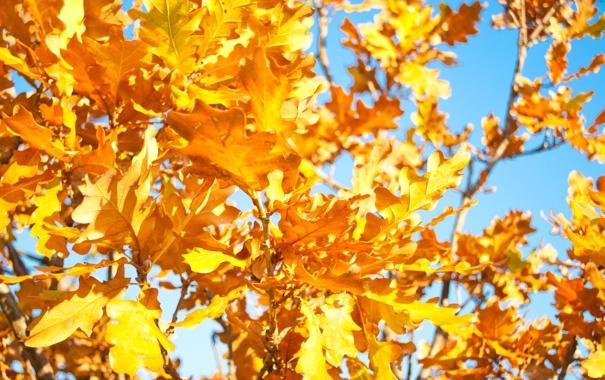 Фото обои осень, небо, листья, тепло, дерево, ветка, желтые