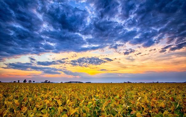 Фото обои закат, облака, горизонт, небо, поле, сша, индиана