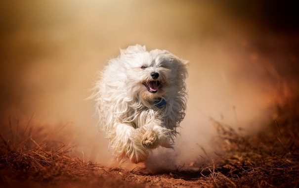 Фото обои друг, собака, бег