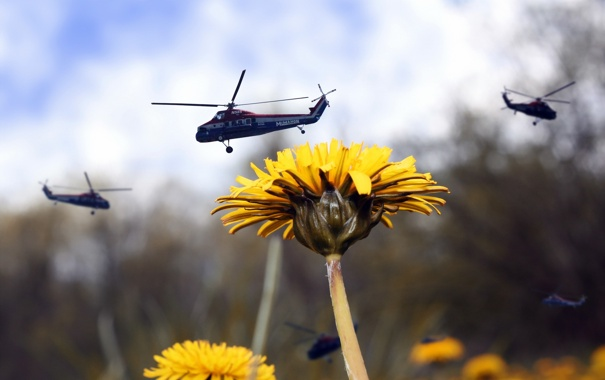 Фото обои ситуация, вертолёты, одуванчик