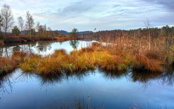 Фото обои осень, трава, вода, гладь, отражение, болото, сухая