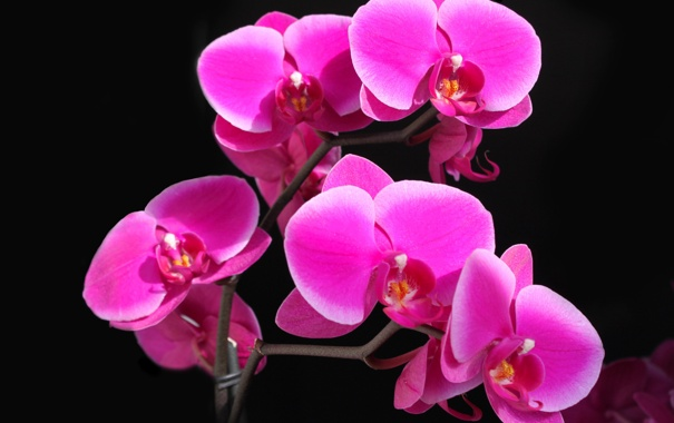 Фото обои цветок, обои, орхидея, тень, контраст, свет, лепестки