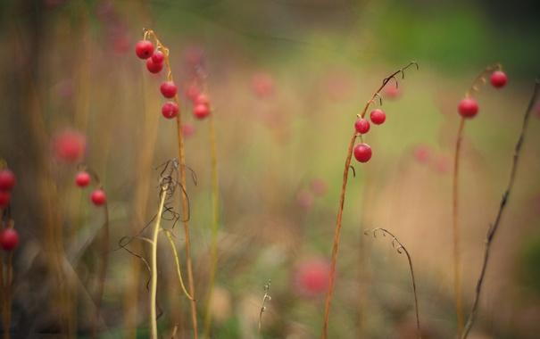 Фото обои лес, ветки, ягоды