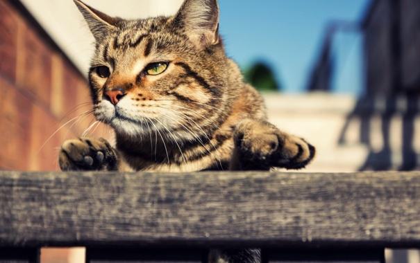 Фото обои глаза, кот, взгляд, кошак, котэ