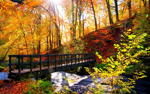 Фото обои лес, деревья, пейзаж, Природа, forest, river, trees