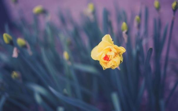 Фото обои цветок, желтый, лепестки