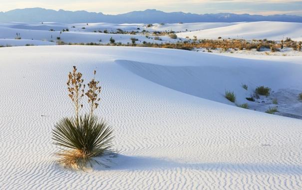 Фото обои песок, пейзаж, горы, природа, пустыня, растение, горизонт