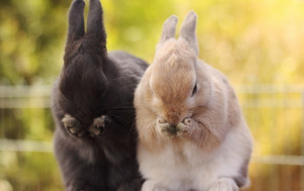 Фото обои зайцы, лапки, животные
