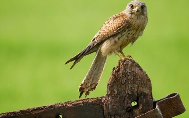 Фото обои птица, хищник, железо