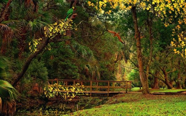 Фото обои трава, листья, деревья, птицы, пруд, парк, попугай