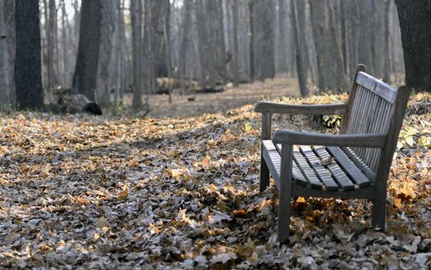 Фото обои листья, парк, скамья