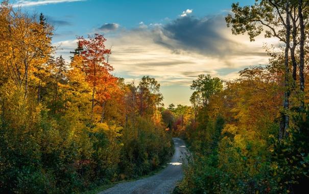 Фото обои лес, осень, дорога