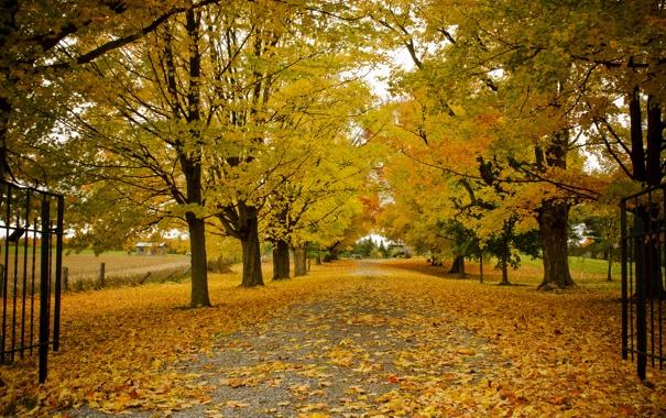 Фото обои дорога, осень, деревья, природа, листва, ворота, Канада