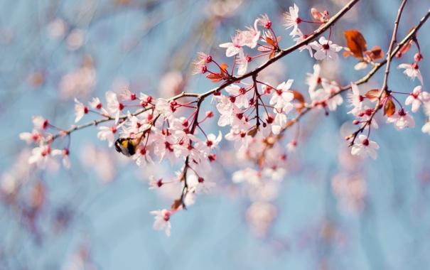 Фото обои весна, пчела, ветки, дерево